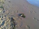 uccellino sulla spiaggia